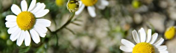 Flors de primavera